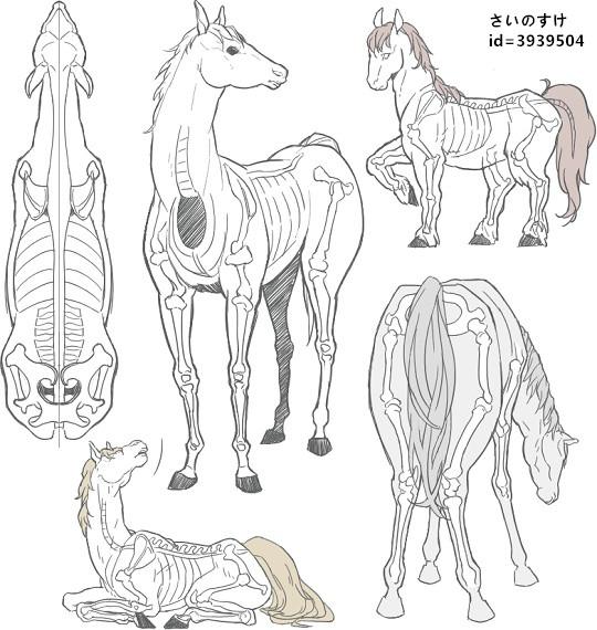【推荐】马的绘画方法—轻微课绘画素材专区