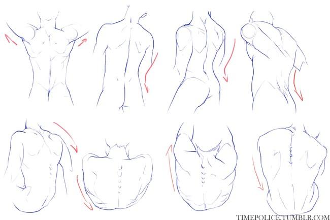 漫画教程图解第八期:人体躯干的绘画参考