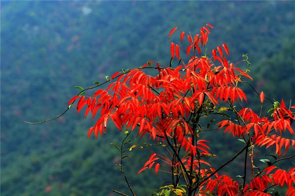 临安大明山春季花开乐开怀   大明山美丽的风景,投怀大自然的怀抱