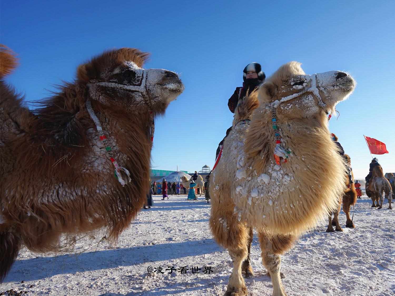 苏尼特右旗骆驼盛会上的艳遇