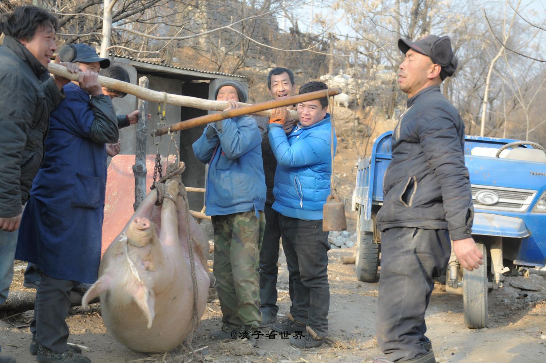 亲眼目睹农村人忙年杀年猪