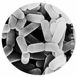 乳酸菌类微生态制剂在饲料中都有那些应用及好处!(图1)