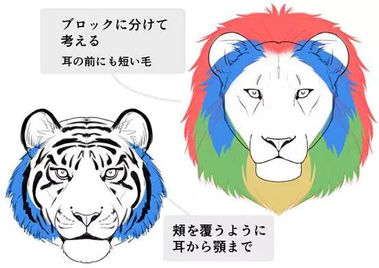 【推荐】猫、老虎、狮子的画法—轻微课绘画教程专区