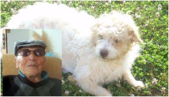 意大利90岁老人去世后 给宠物狗留下100万欧元遗产!