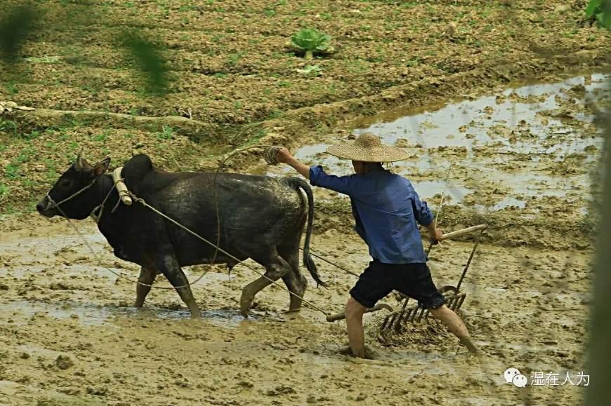 人类的择偶史之农业时代