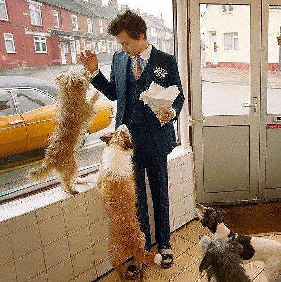 "Gucci2018秋季男装广告发布 宠物鸡和""小鲜肉""是主角"