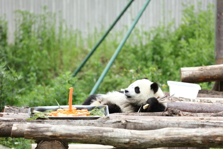 熊猫指南,像呵护大熊猫一样呵护中国农业