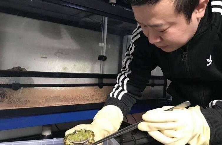十年花近百万养蛙 重庆男子梦想建一个爬虫繁育基地
