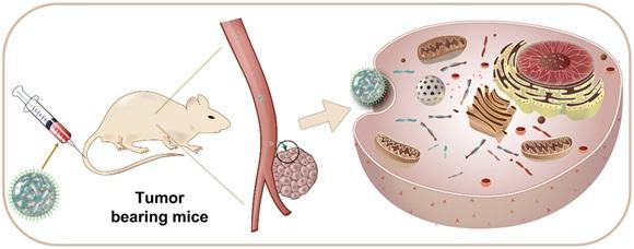 纳米颗粒靶向治疗肿瘤研究获进展