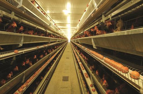 走进德青源生态农场 见证安全好鸡蛋