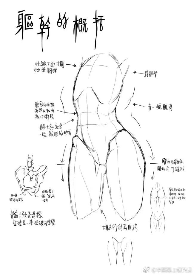 【动漫教程】人体躯干与胸部的画法