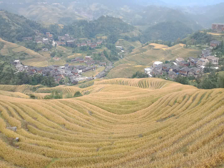 10月旅游!桂林,阳朔,龙脊梯田网红的精华绝密行程
