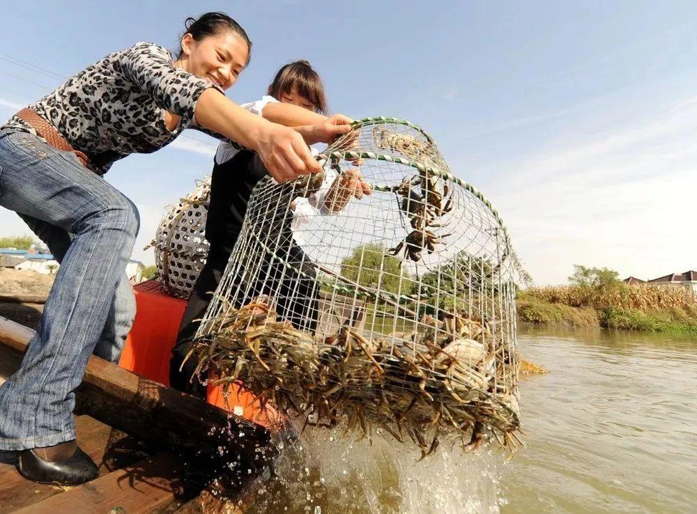糾結陽澄湖大閘蟹是真是假?食蟹地圖告訴你哪的螃蟹更美味! | 賞味