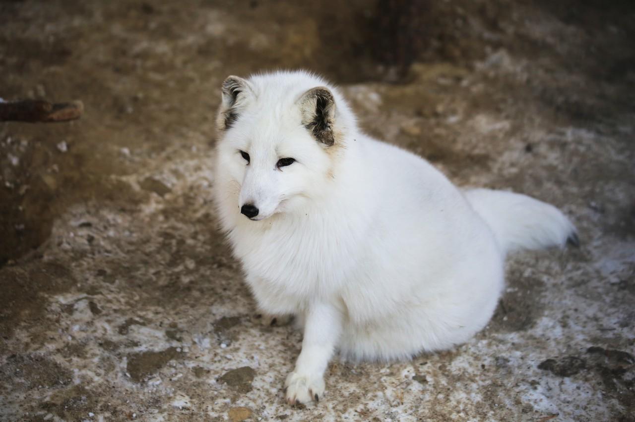 孤寡老人接生了一窝狐狸,三年后去世,一群儿子来给他送终