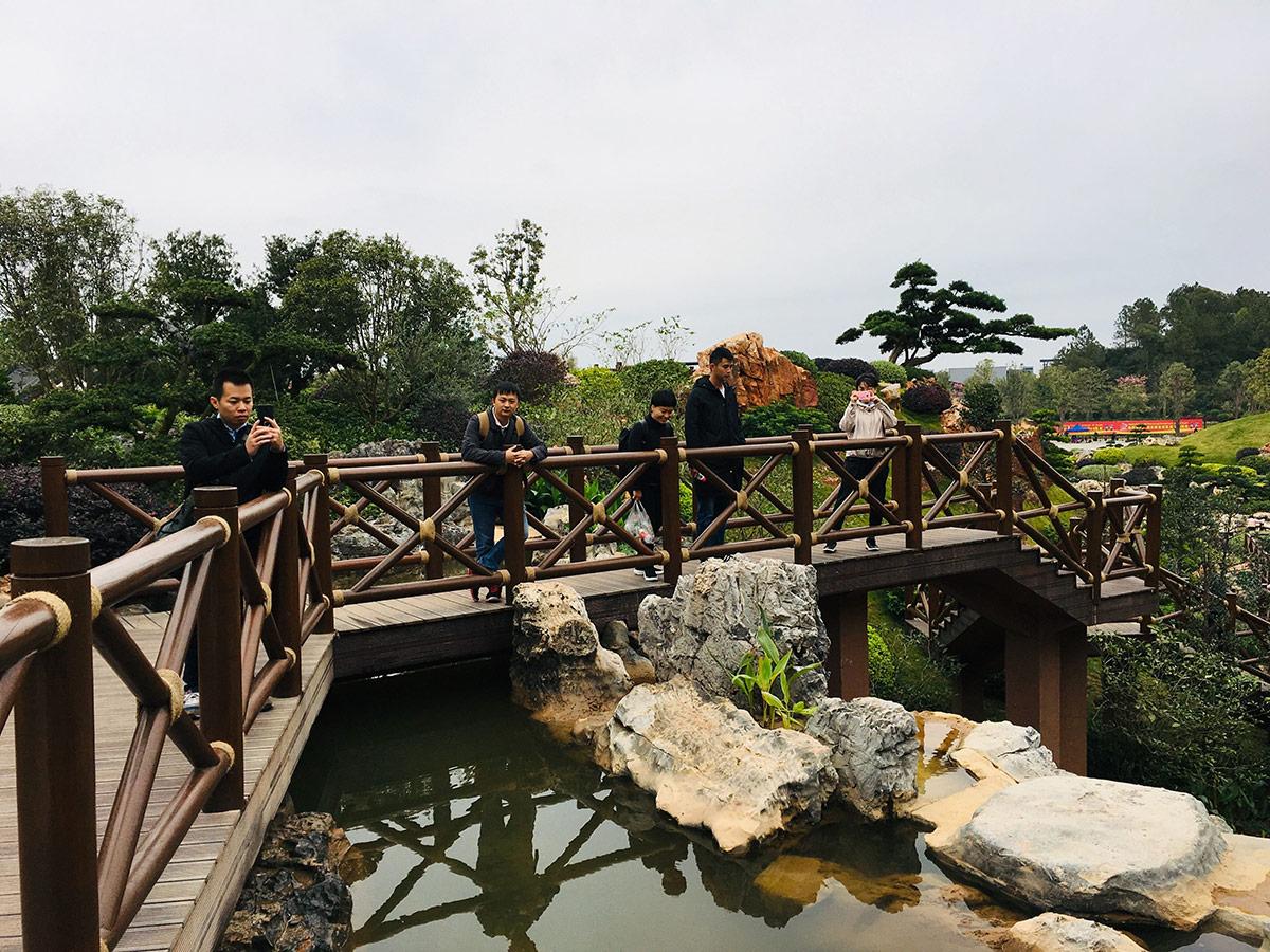 峰程7080集体翘班只为看第十二届中国(南宁)国际园林博览会 (6)