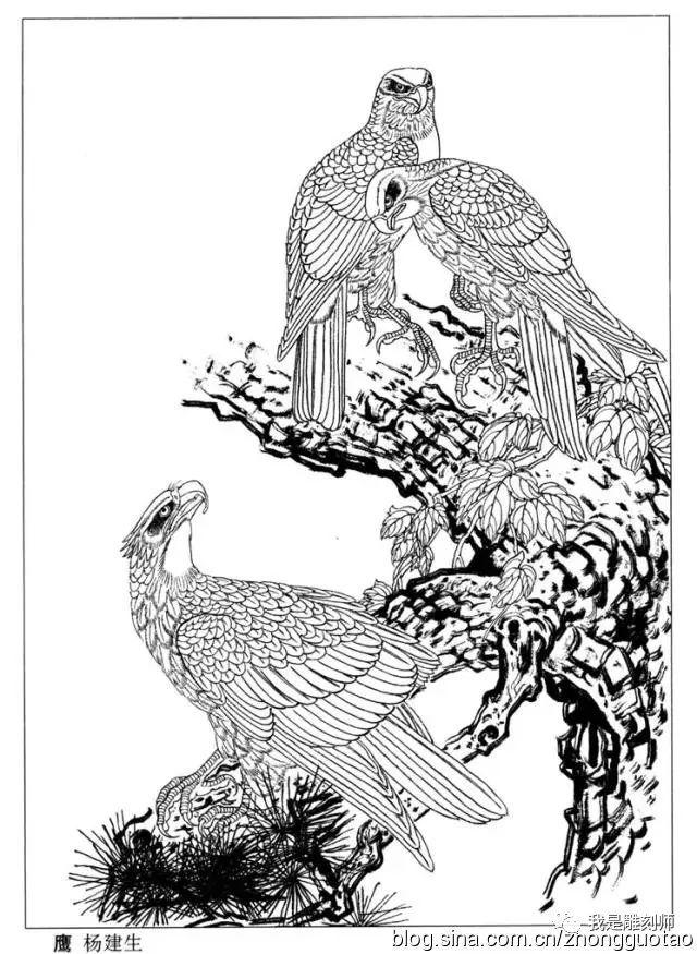 我是雕刻师工笔画 白描图谱之鹰