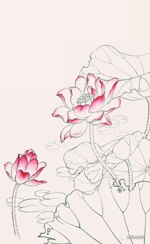 工笔画教程:荷花白描线稿和上色详细步骤图解,简单易学,收藏
