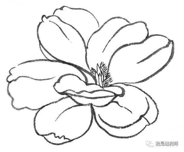 零基础工笔画教程:玉兰花的工笔画法,喜欢国画的都快来临摹吧