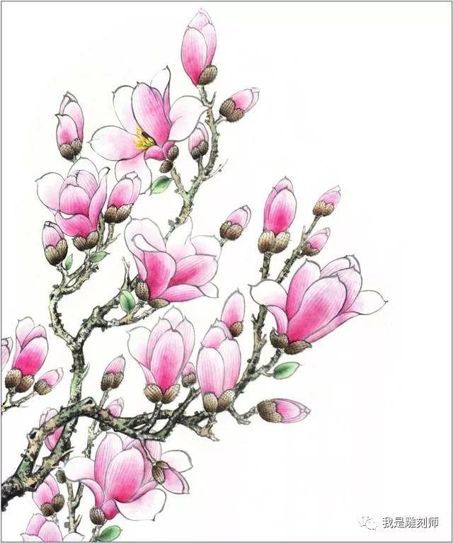 5 继续用勾线笔,蘸白粉,与少量的水调和,修饰花托,再复勒画面。 4 作品赏析 玉兰花在春天开放,花瓣形状略长。在绘制玉兰花时,应先勾画出花的大致结构,然后再进行分染和罩染。勾画花瓣时中侧锋兼用,落笔要有虚有实,在转折的地方可适当地夸张一些,使勾出的线有轻重、起伏的变化。