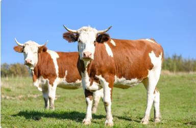 江苏省切实加强牛羊屠宰检疫监督 保障产品安全