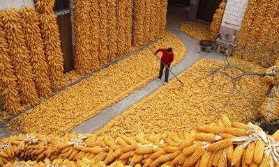 我的关键词 玉米,涨钱啦 !!!  热点新闻