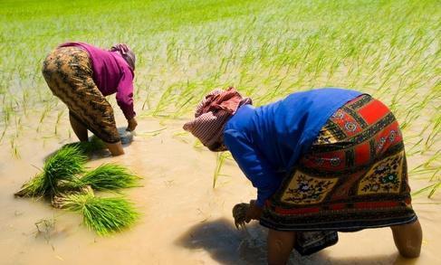 我的关键词 东南亚最落后的国家,农村人住茅草屋,但生活却是很幸运  消息资讯