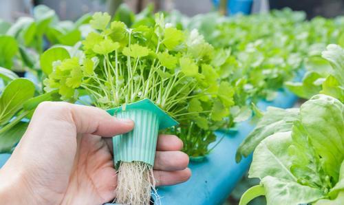 我的关键词 有人说无土栽培蔬菜吃多对人体有伤害,那么它的坏处到底是什么?  网贷
