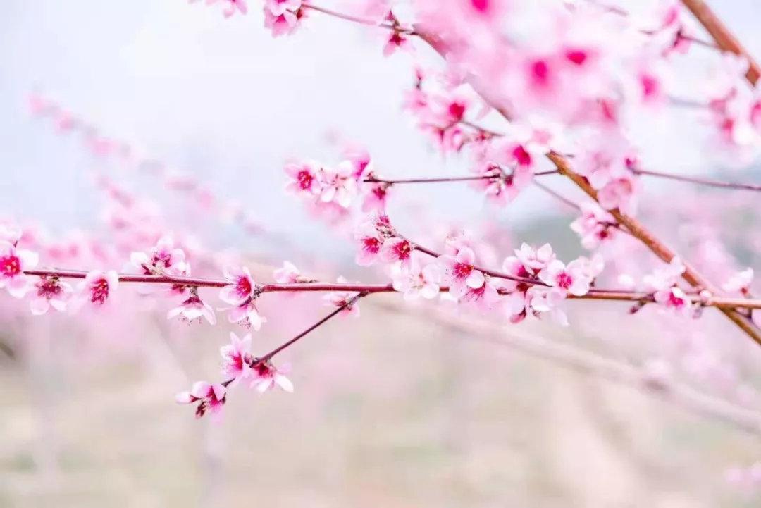 我的关键词 腾冲的春季,等等我们!顿时就好!  消息资讯