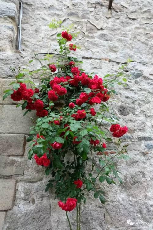 我的关键词 情人节专题,今天我们来到保加利亚聊一聊玫瑰情话  时尚