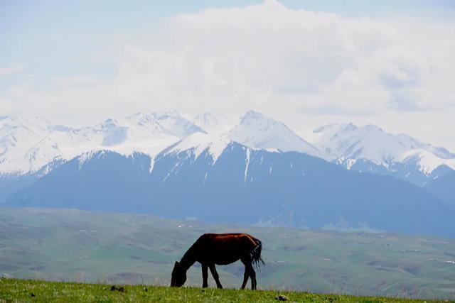 我的关键词 2020摄影之旅,要到占中国地皮六分之一的新疆,其中这12个最诱人  消息资讯