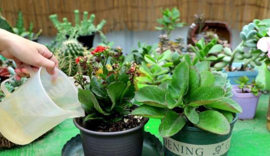 此花是家居养花的最佳选择,花期长、花色丰富,寓意健康长寿  证券股票