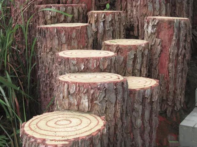 所有的树木都有年轮吗?