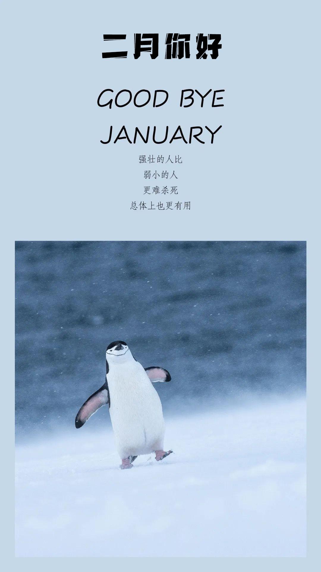 二月你好配图海报图片大全,2月简单文字图片,正能量朋友圈文案