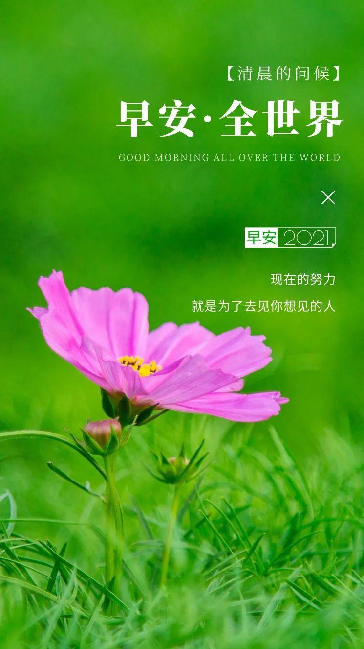 6月6日早安日签图片正能量带字,阳光早上好语句,迎接新的一天