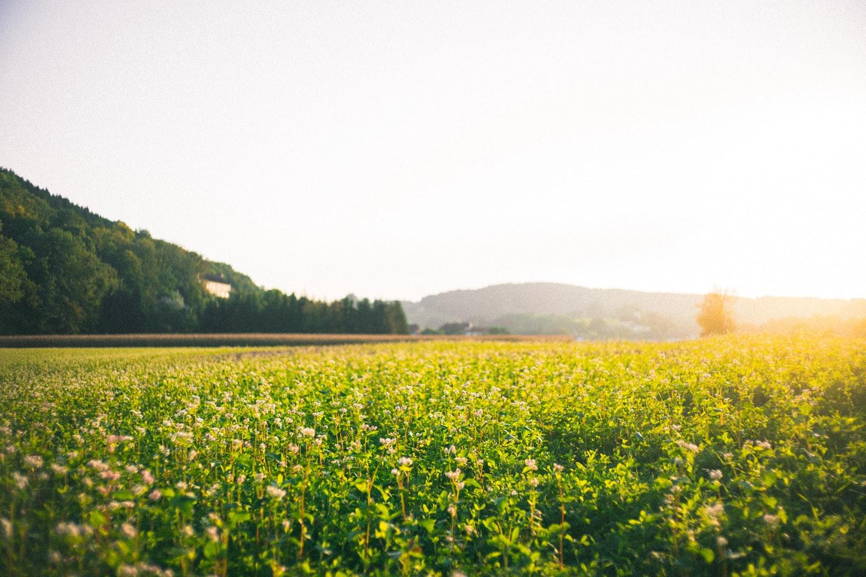正能量早安心语图片带字,励志早安语录,敢拼敢赢